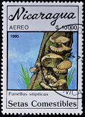 Постер, плакат: Марку напечатанную в Никарагуа показывает съедобных грибов Панеллюс stipticus шафран молока Cap