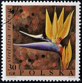 POLAND - CIRCA 1968: A stamp printed in Poland shows a flower Strelitzia reginae