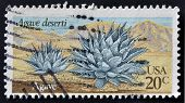 A stamp printed in USA shows Agave deserti