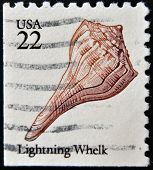 A stamp printed in USA shows Lightning whelk (Busycon contrarium)