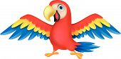picture of animated cartoon  - Vector illustration of Cute parrot bird cartoon - JPG