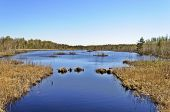 stock photo of boggy  - Spring landscape with peat lake among morass - JPG