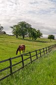 Vaud (switzerland) - Horses