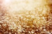 Beautiful fresh chamomile meadow in warm sunset light, selective focus, fine art, greeting card, abs