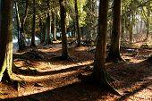 Cedars Forest