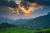Beautiful sunset over green tea plantation in Munnar, Kerala, India
