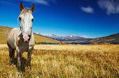 Pferd im Torres del Paine Nationalpark, Laguna Azul, Patagonien, Chile