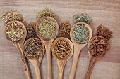Herb selection for alternative health remedies in olive wood spoons over papyrus background. White willow, irish moss, yarrow, orange blossom, lemon grass and oak bark, left to right.