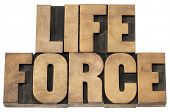 life force  - isolated text in letterpress wood type printing blocks