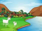 Illustration of the two goats at the riverbank