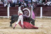Spanish bullfighter Juan Jose Padilla with the cape bullfighting a bull of nearly 600 kg