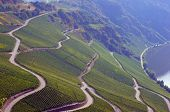 stock photo of moselle  - Roads in a vineyard on the Moselle in Germany - JPG