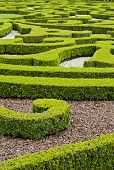 boxwood ornamental garden