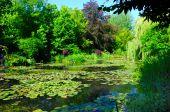 Monets Teich mit Wasserlilien