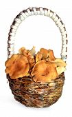 stock photo of shroom  - chanterelle mushrooms in a basket in the weaved hand - JPG