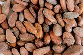 Cocoa beans, close up