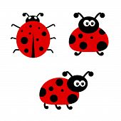 Ladybug Cartoon Vector Illustartion