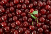 Red Cherries Background