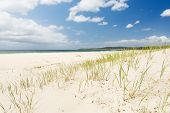 stock photo of dune grass  - Bright blue sky with white sand and green grass on the sand dunes - JPG