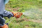 picture of weed  - A man is spraying herbicide in fram that has many weed - JPG