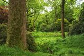 Landscape Image Of Beautiful Vibrant Lush Green Forest Woodland Scene