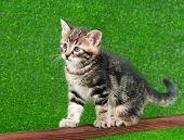 Cute little kitten playing on wooden plank on green background