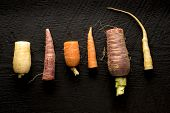 Organic Heirloom Carrot Arrangement