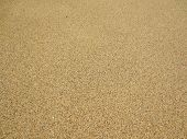 Grains Of Kahala Beach Sand