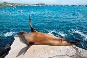 Sea Lion Resting Under The Sun, Puerto Baquerizo Moreno, Galapagos