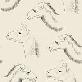 stock photo of lamas  - sketch of  camel and lama on a beige background - JPG