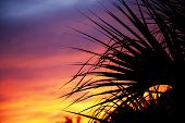 stock photo of florida-orange  - Palm trees silhouetted against the sunset in Florida