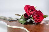 Red Rose And Ukulele