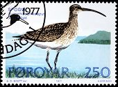 Whimbrel Stamp