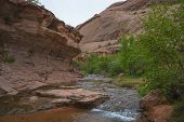 stock photo of negro  - Creek along the Negro Bill Canyon trail leading towards morning glory bridge