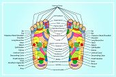 stock photo of reflexology  - scheme of foot Traditional alternative heal - JPG