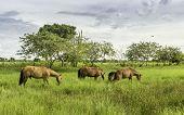 Rural scene in Pantanal, Brazil