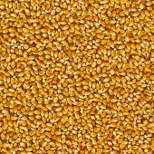 Seamless Tileable Texture of Corn Beans.