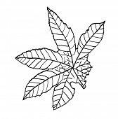 leaf of castor, vector sketch illustration