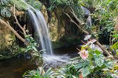 Waterfall And Flowers In A Dutch Tropical Garden