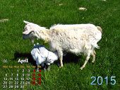 Calendar For April Of 2015 Year With Goat And Kids