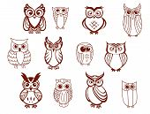 foto of halloween characters  - Set of line drawn cartoon vector owls characters with cute expressions and large eyes in brown and white - JPG