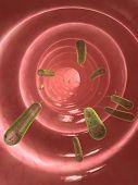 e. coli in colon