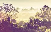 image of jungle  - tropical jungle in Mexico - JPG