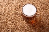 foto of malt  - Mug of light beer standing on malted barley grains - JPG