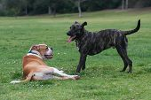 picture of breather  - All the rough play leaves one dog tired and the other eager for more - JPG