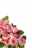 foto of petition  - A bouquet of beautiful petite pink roses on a white background - JPG