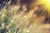 stock photo of morning  - The morning dew - JPG