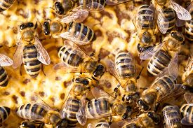picture of honeycomb  - Macro shot of bees swarming on a honeycomb - JPG