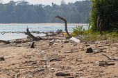 stock photo of polluted  - Dirty beach on the island of Little Andaman in the Indian Ocean littered with plastic. Pollution of coastal ecosystems, natural plastic and beaches. ** Note: Shallow depth of field - JPG