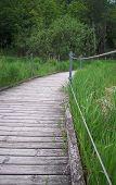 image of wetland  - A wood boardwalk through the green wetland - JPG